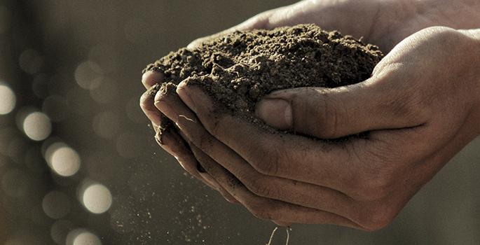 Producción propia de frutos secos - Alpinu